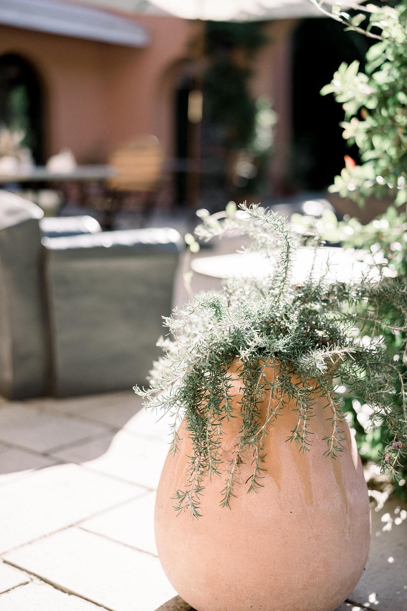Les jardins de l'Hotel à Saint Jean de Luz, Le Chantaco, Pays basque, côte basque